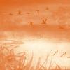 monochromatic wetland ...
