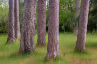 Muckross House Trees
