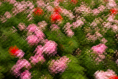 Fondation Claude Monet, Giverny, France