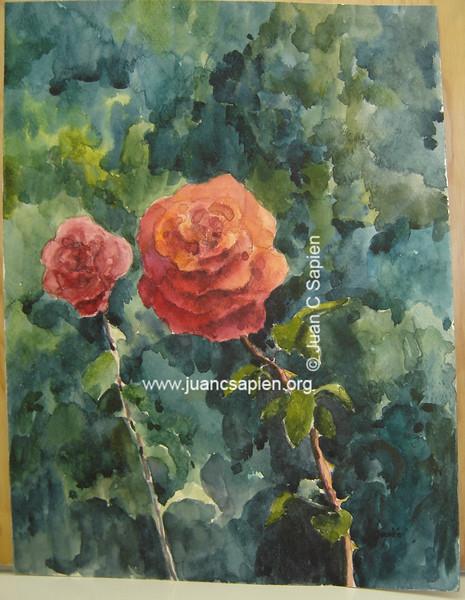 Rosal 1