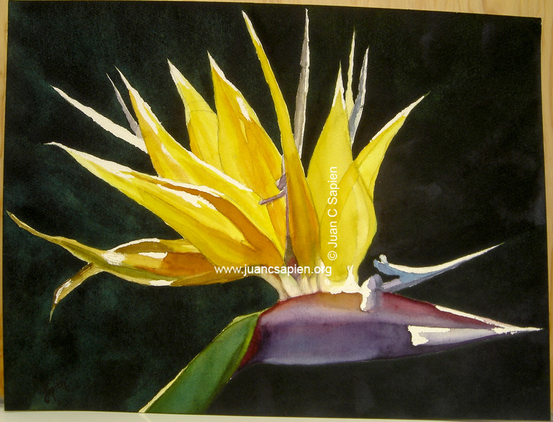 Flor close up 3
