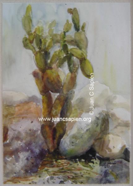 Cactus 2, Serie 2