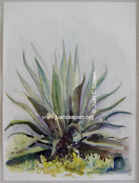 Maguey, Serie 1