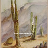 Cactus 1, Serie 2
