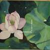 Flor close up 5
