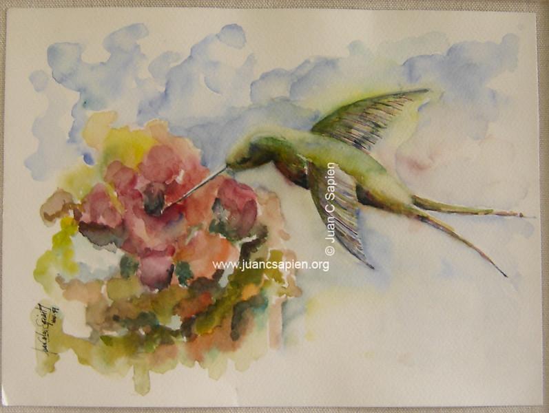 Colibri, Serie 1