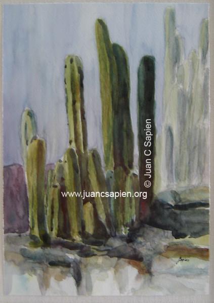 Cactus 6, Serie 2