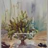Cactus 7, Serie 2