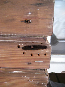 "Typical ""dry rot"" around old rusted nail. Holes are drilled to allow application and absorption of epoxy consolidant."