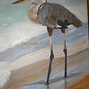 """Great Blue Heron (acrylic on canvas)<br /> ~30""""x40""""<br /> <br /> Still on the easel...getting down to finishing touches."""