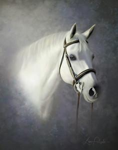 Caitlyn Horse_11 jugeF