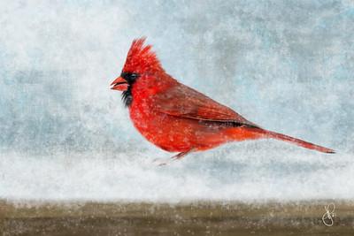 jspring_birds-9755_06