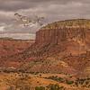 Flock of Sand Hill Cranes