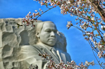 Washington Cherry Trees