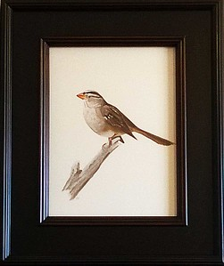 White-crowned Sparrow 9x12 oil on paper