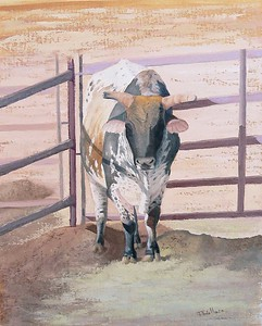 Rodeo Bull - Oil on canvas board 16x20 @ CatchLight Art Gallery