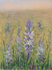 """""""Field of Camas"""" - Oil - 12""""X9"""" - In Private Collection"""