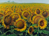 "Field of Sunflowers - Oil - 18"" x 24"""