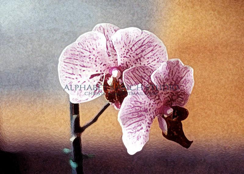 TK orchid 2 al mr db10 2 3
