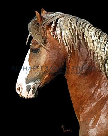 Equine Art Created From Original Photographs