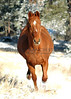 G'Donya, Rex! blasting back up the hill.  Original photo by Larry Rogers.  November 21, 2004