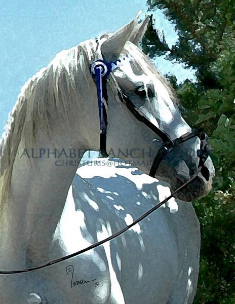 Dama, Andalusian mare