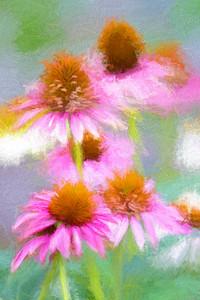 Pink Dreams 964