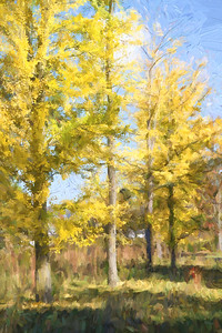 Yellow Trees 209