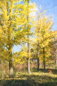 Yellow Trees 209