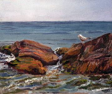 Gull on Rocks