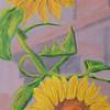 Sunflowers a la Seine - #136