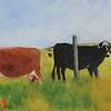 Pt. Reyes Cows - #110