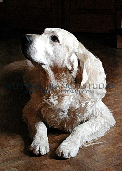 Jazz, Golden Retriever.  More texture in this one.
