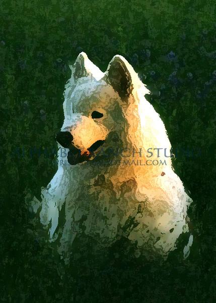Bear, Samoyed