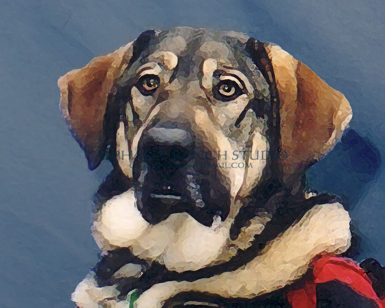 Buster, one of the Freedom Service Dogs in Denver, Colorado.    <br /> <br /> Freedom Service Dogs, Inc. (FSD) was founded in 1987 as<br /> a tax-exempt charity.  FSD rescues dogs from Front Range<br /> shelters and gives them a second chance.  We train Freedom<br /> Service Dogs to help people with mobility impairments gain<br /> independence, confidence, endurance, and peace of mind.<br /> We provide the dog at no charge to the client.<br /> Freedom Service Dogs limits its service area to Colorado<br /> so that we can provide substantial support – hands-on when<br /> needed – for the lifetime of our client-dog teams.<br /> <br /> Freedom Service Dogs, PO Box 150217, Lakewood, CO 80215-0217<br /> Ph: 303-922-6231, Fax: 303-922-6234, URL: freedomservicedogs.org<br /> <br /> <br /> Original Photograph by Blue Moon Petography