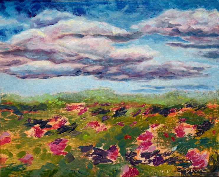 Rosa Rugosa & Clouds