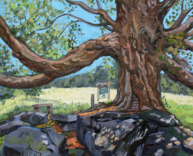 Crocker Maple Wachusett Meadow