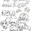 Penelope the Dachshund sketches<br /> Studies for children's book in progress