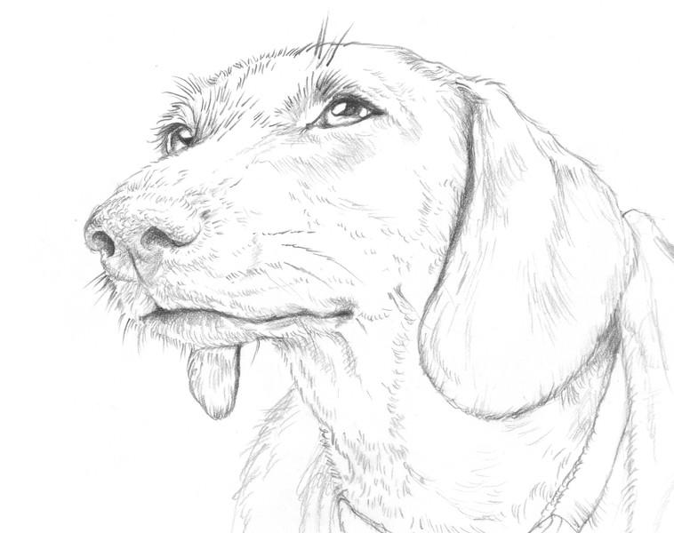 Portrait of Sarah - Work in Progress 1, Sketch phase