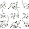 Cat Spin Motion Study<br /> By Laura D. Hoffman<br /> 12/2009