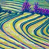Meandering Rice