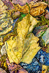 Yellow Greeen Leaf, Leaves & Grass