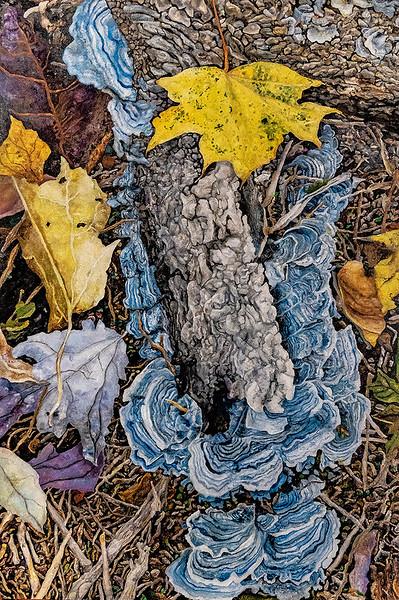 Fallen Tree, Mushrooms, Leaves