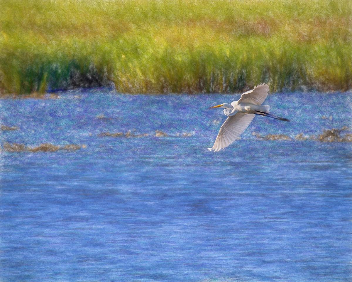 Pawleys2014-8417 full (Egret over Marsh)