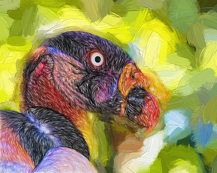 DallasZoo090812-King-Vulture-Painting
