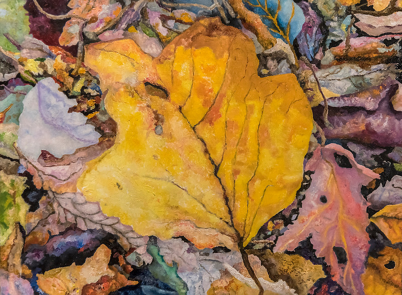 Large Yellow Leaf, on the Ground
