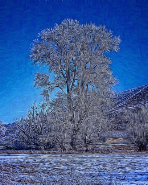 hoar_frost-0198(gum tree) PAINTING