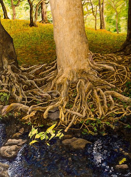 Morris Park Tree Roots