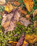 Purple, Yellow & Green Leaves
