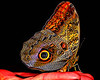 owl eye - 4464 Painting